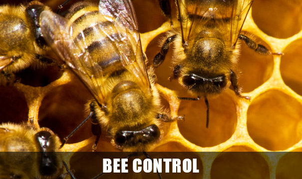 Bee Removal, Control Tucson AZ