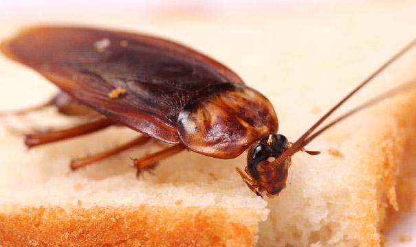 Cockroach Control Nogales Az Pest Control Rio Rico Az